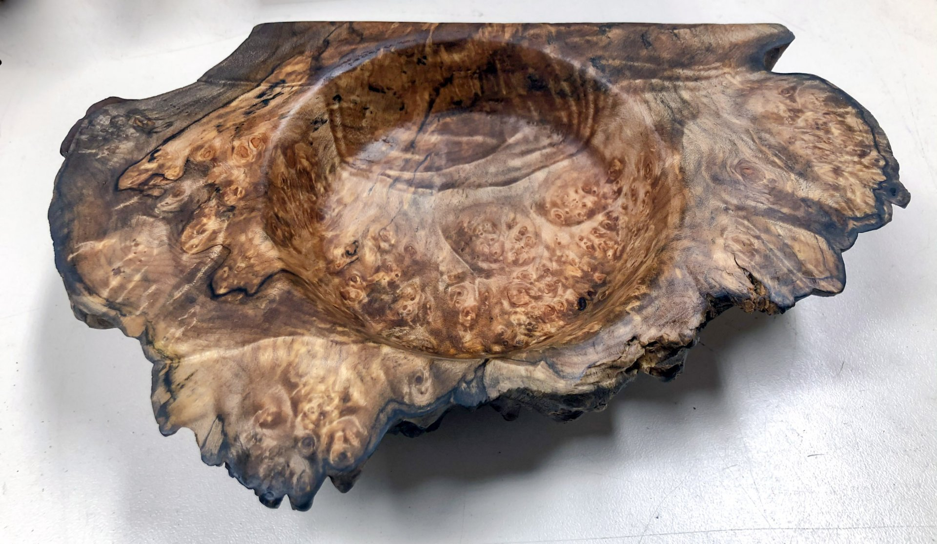 Big leaf maple burl change dish